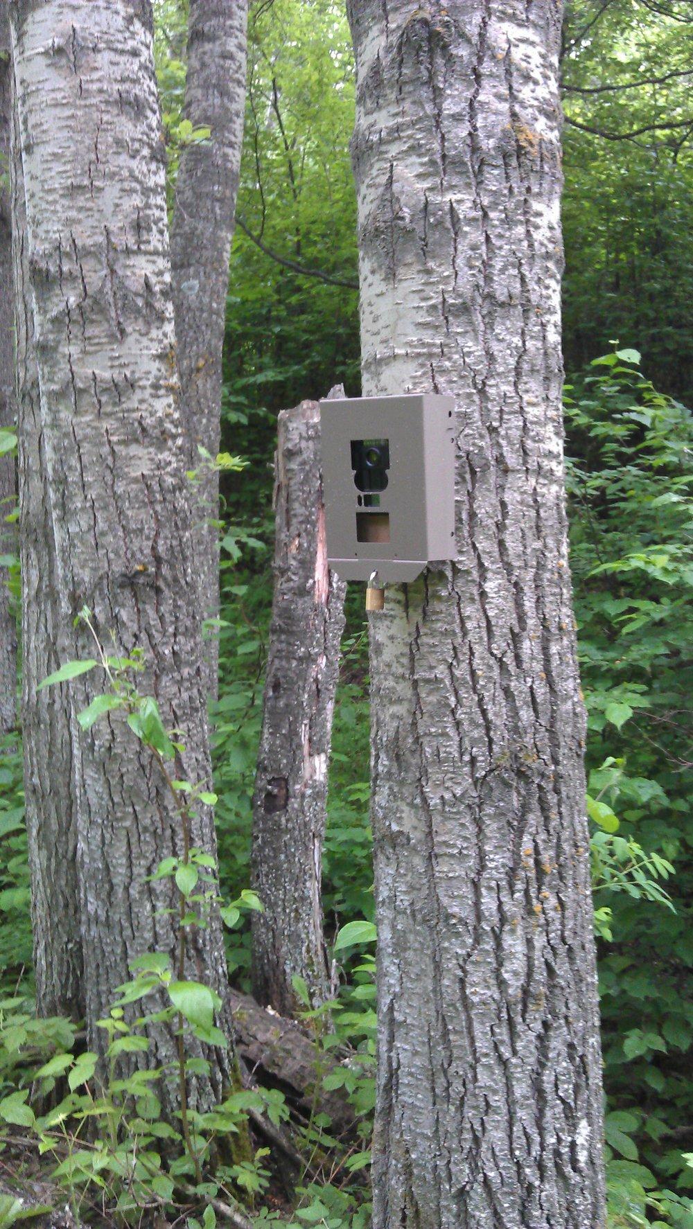 Wildlife camera on EALT lands