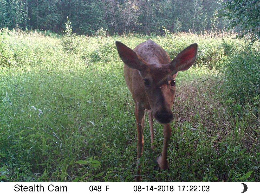 Deer at Glory Hills