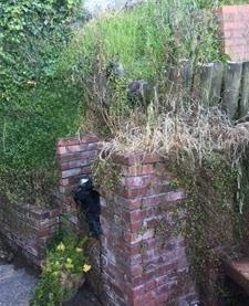 Overgrown corner