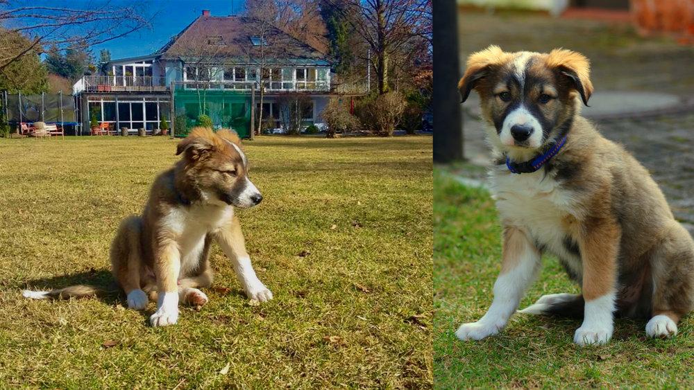 Heute ist Therapiehund Paul bei uns. Gerade mal 12 Wochen alt... er tut uns allen gut!