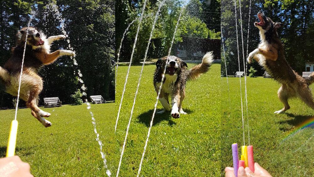 Da freut sich aber einer... unser Therapiehund Paul kriegt eine Abkühlung bei der momentanen Hitze.