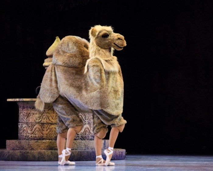 Photo of The Sorcerer's camel in Ballet West's  Aladdin . Photo by Luke Isley.
