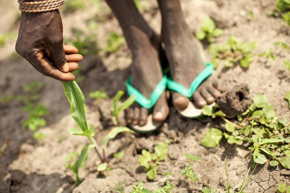 South-Sudan-Gardening.jpg