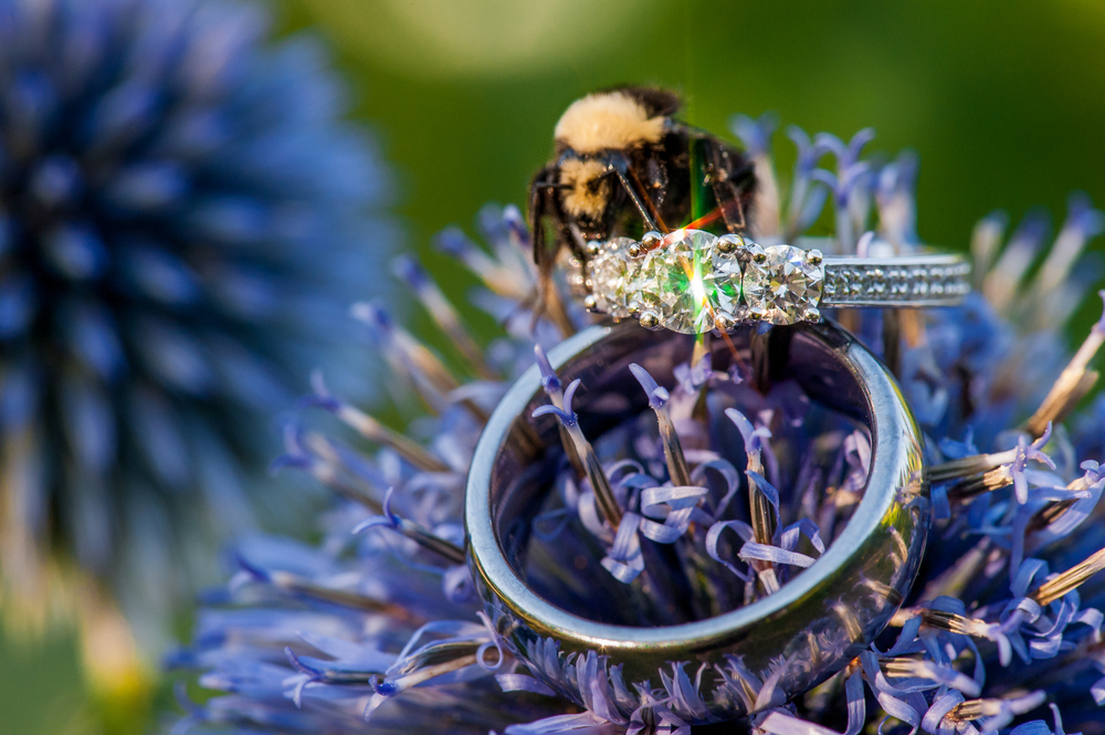 "^ ""Sometimes I'm just plain f**king lucky.  Fact.""   I do most of the ring photos at our weddings because it's something I really enjoy.  It's like shooting tiny landscapes to me.  During Jimmy and Esther's wedding at VanDusen, I wandered into the garden to capture their rings amongst these funky purple flowers. I got pretty excited when the bee landed in the frame as I was shooting. Then, I got a million more times excited when, during one brief flash of a second, the flower waved in the wind just enough to catch the sunlight just right, flashing a spectrum of light into my lens."