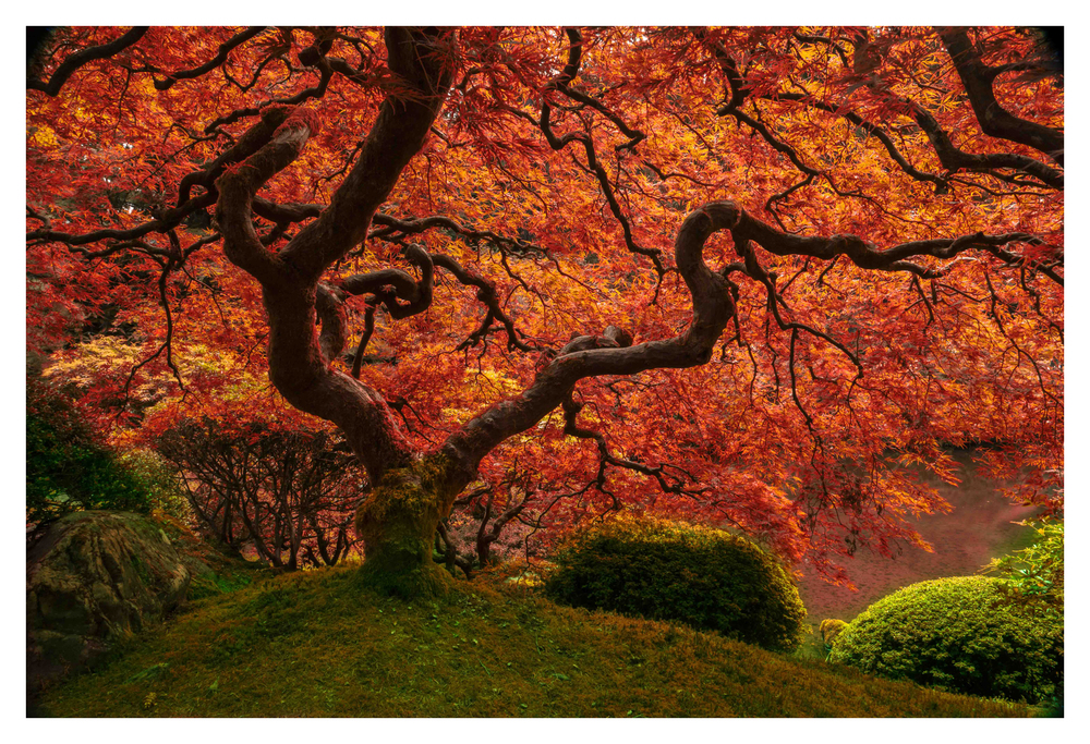 2014-10-13 Oregon Portland Japanese Garden Japanese Maple 01-1b