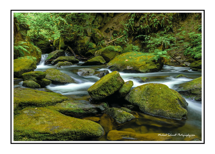 Whatcom Creek white Border_resize.jpg