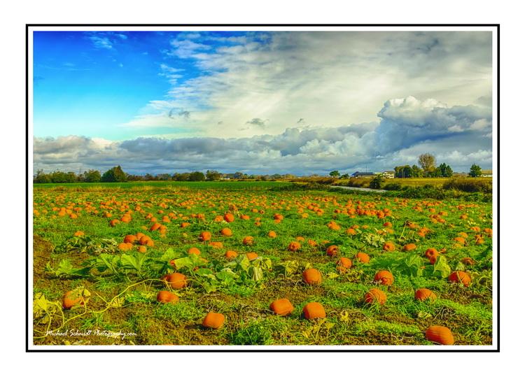 2014-10-26 Ladner Westham Island Pumpkins 08