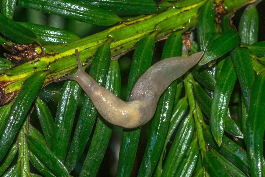 2014-06-30 Vancouver West End Snails-28