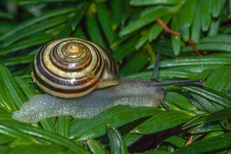 2014-06-30 Vancouver West End Snails-11