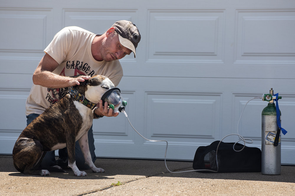 Ron Bristol cares for Lucy after the dog was rescued by firefighters from a house fire June 21 on 19th Avenue in Moline. Bristol, a neighbor of the Carr family whose house caught fire, said Lucy was located in the basement of the home. Jim Versluis, a training officer with the Moline Fire Department, said Lucy and Truman, the family's other dog, were rescued from the home, but the family's bird died. Jasmine and Daniel Carr and their two sons were not home at the time of the fire. Jan MacFarlane, a neighbor to the family, said the family moved in a few weeks ago. — June 21, 2016, Moline, Illinois.