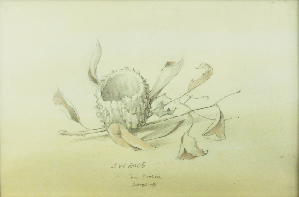 HUMMING BIRD NEST, 2005, Graphite and Wash on Paper, 5 1/2 x 9""