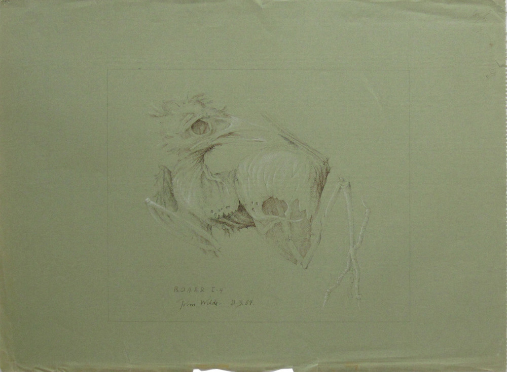 R.O.A.E.D. I-4, 1984, Pencil and Ink Heightened by White Chalk on Green Paper, 18 x 24""