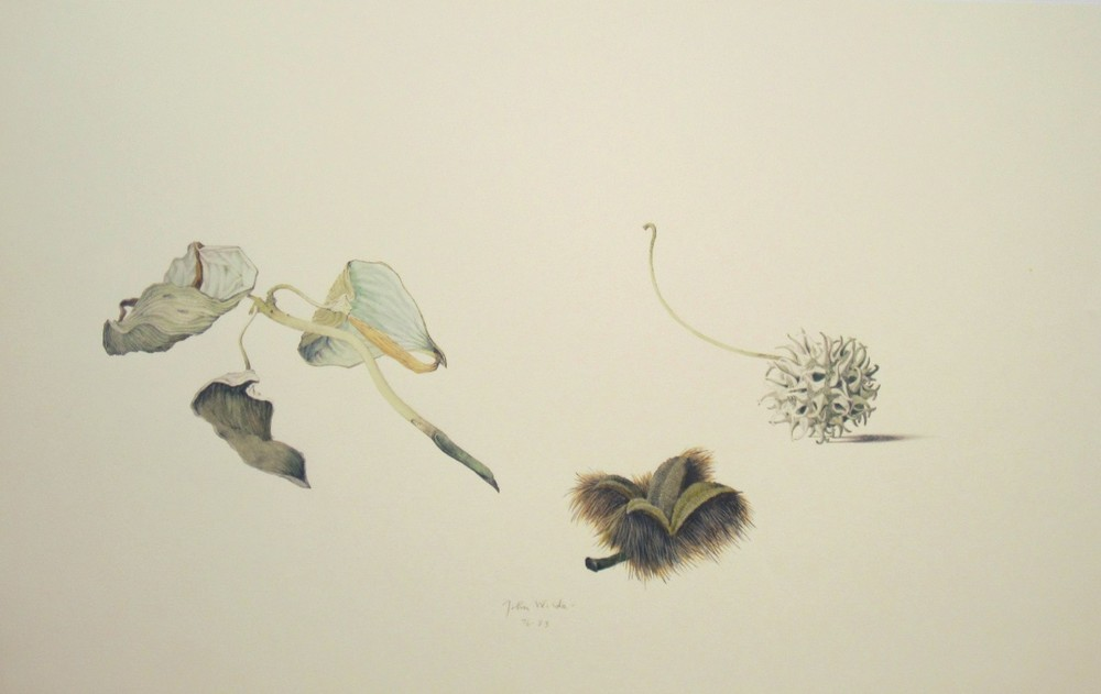 VARIOUS NATURAL OBJECTS, Color Lithograph, 14 1/2 x 23 1/4""