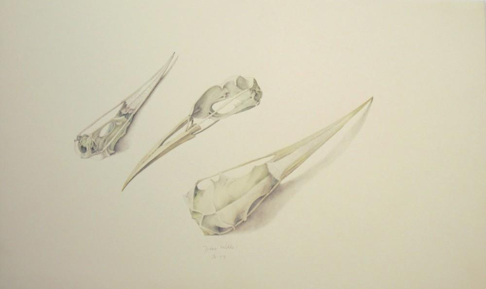 """BIRD SKULLS, Lithograph, 14 x 23"""""""