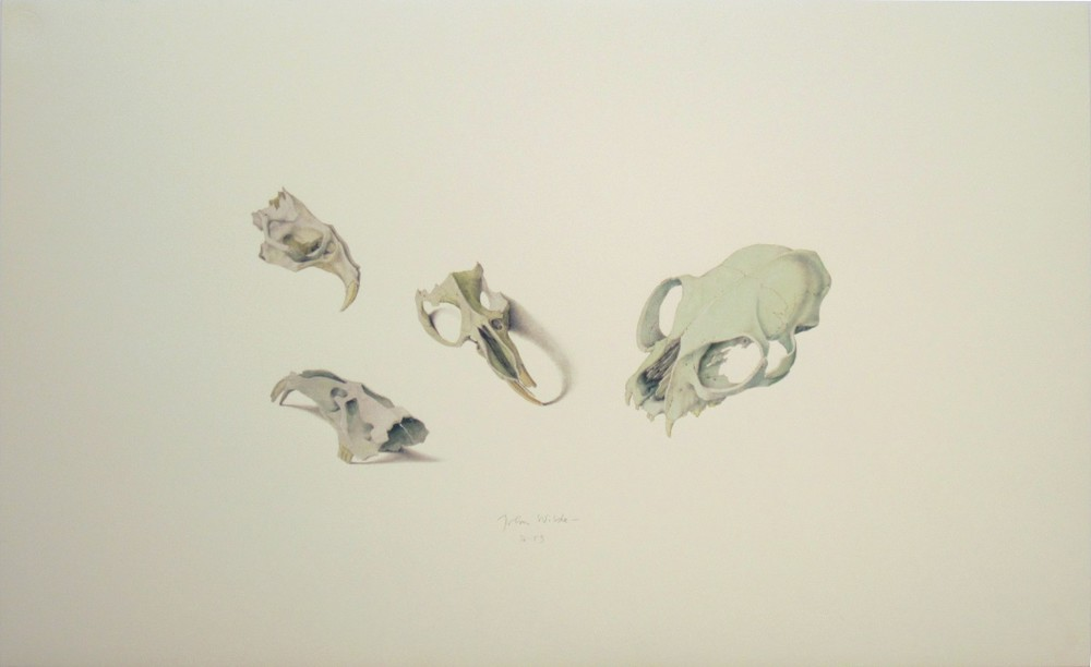 ASSORTED SKULLS, Color Lithograph, 14 1/2 x 23 1/4""