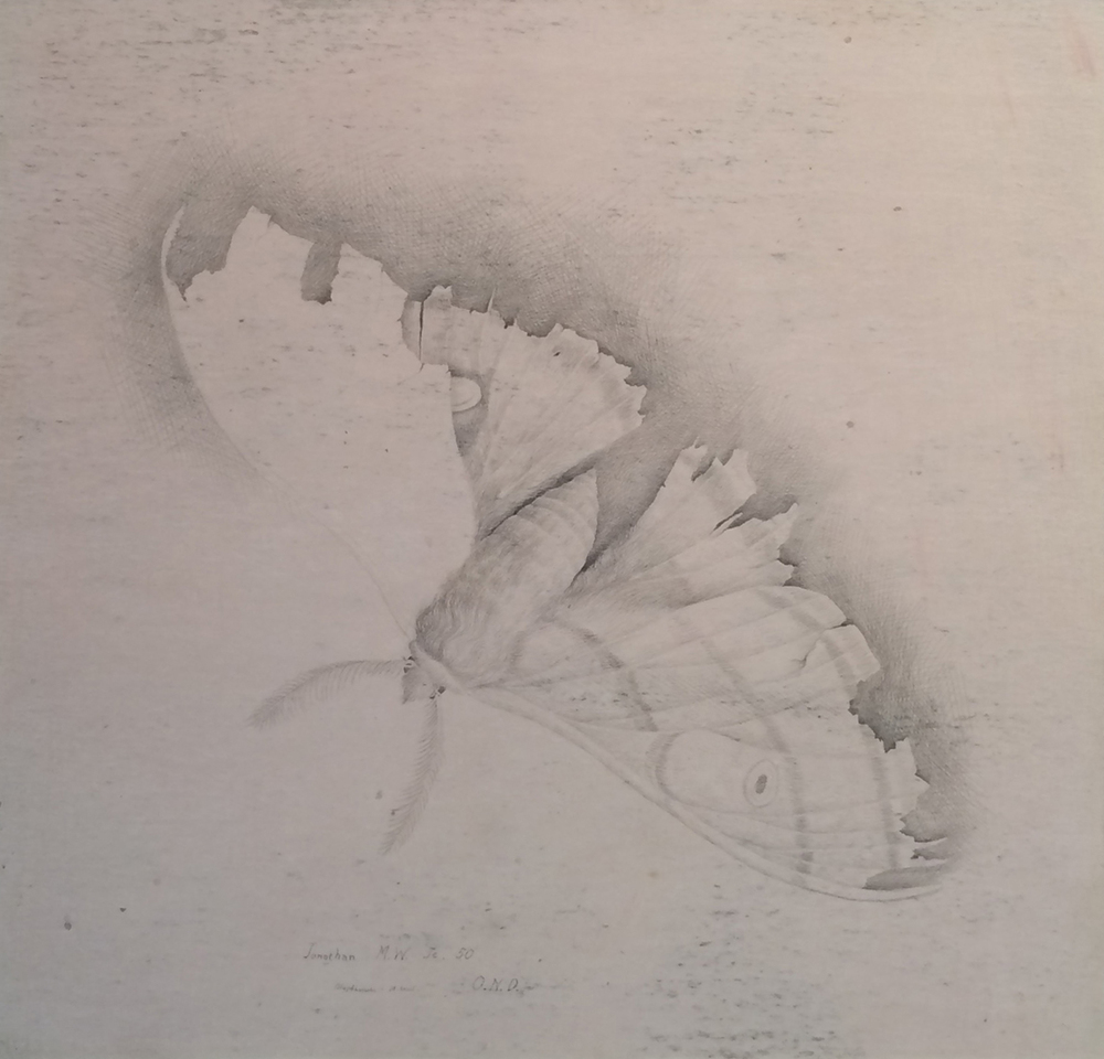 "POLYPHEMUS (MOTH), 1950, Silverpoint on Paper, 12 1/2 x 12 1/2"" framed 19 1/2 x 19 1/2"""
