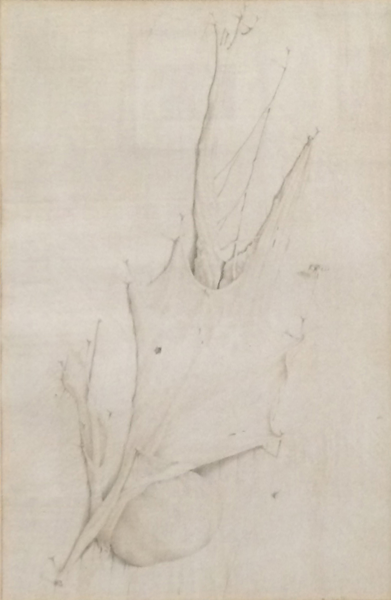 LEAVES, Silverpoint, 8 1/2 x 6 1/4""