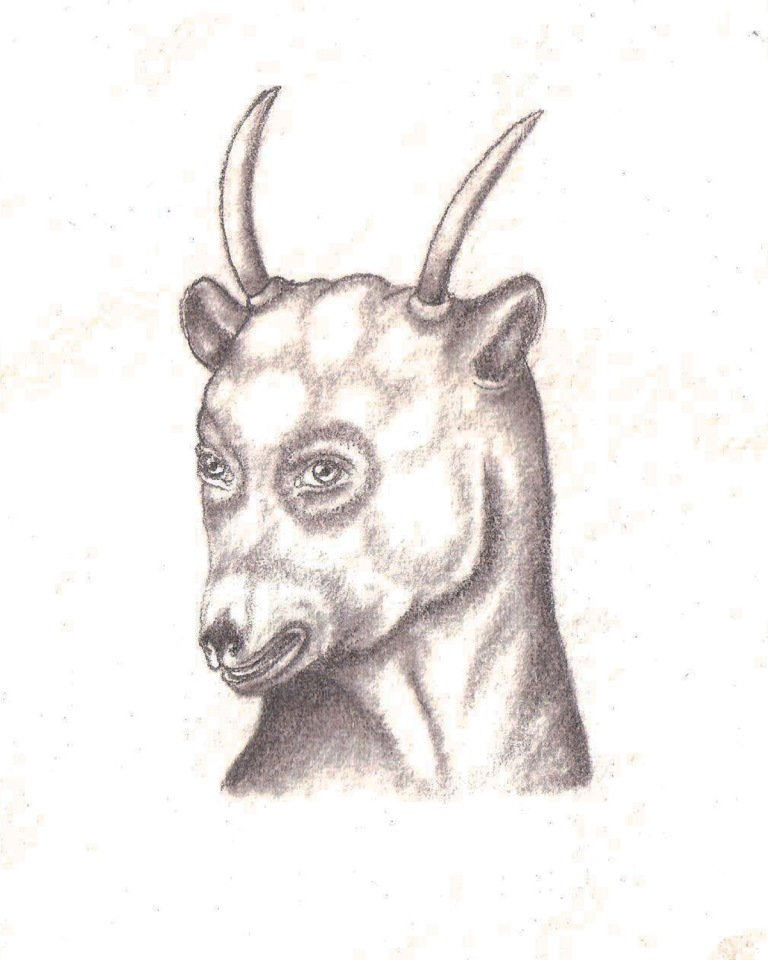 "MARSH GOAT III, Graphite on Handmade Indian Paper, 7 x 5"" framed 11 x 9"""