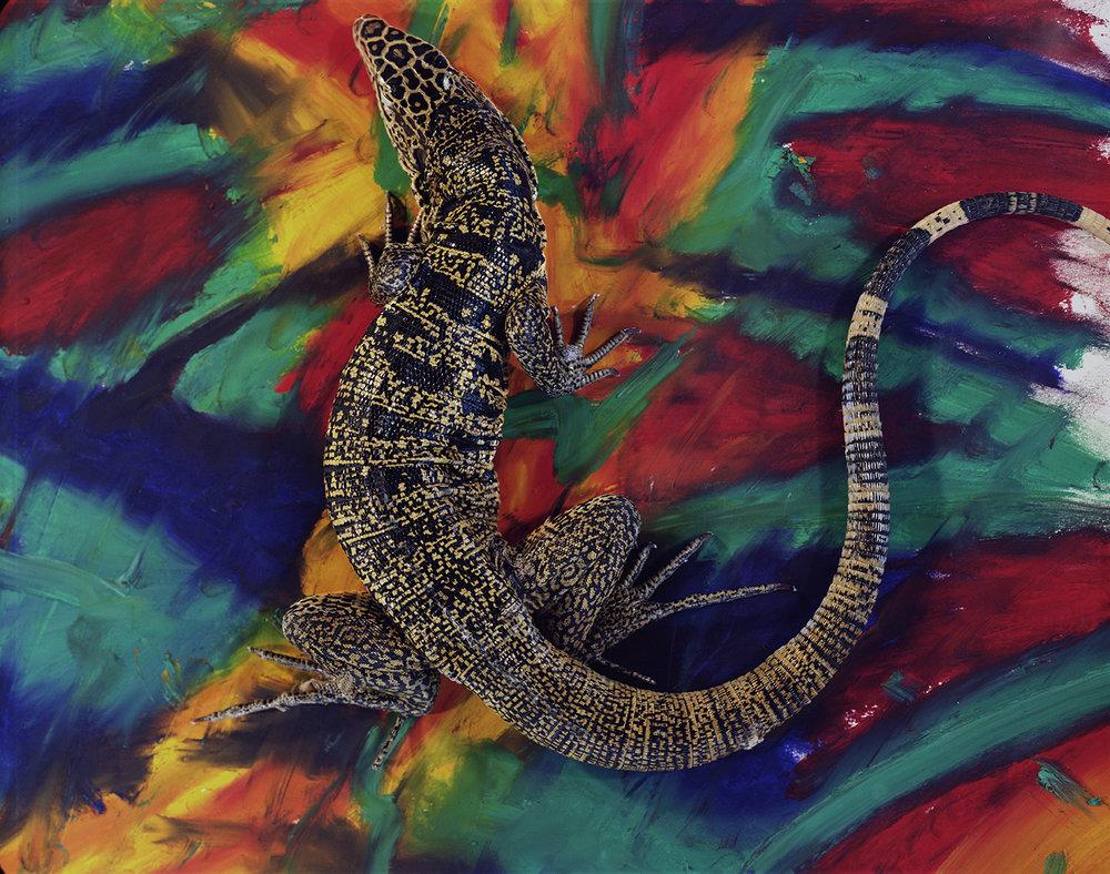 Ivan tegu lizard_oil paint stick.jpg