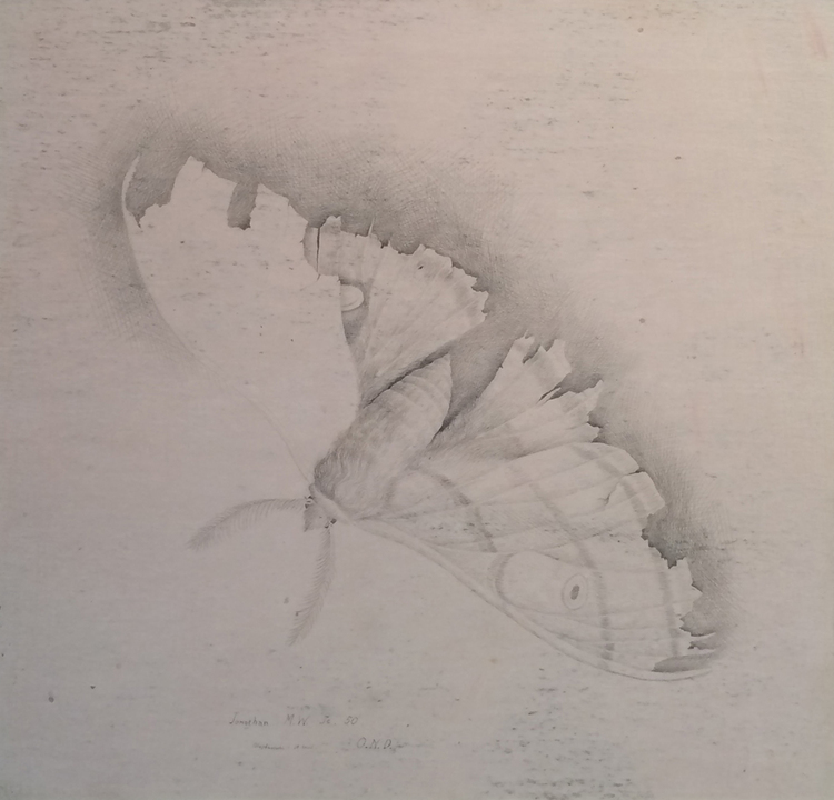 """POLYPHEMUS (MOTH), 1950, Silverpoint on Paper, 12 1/2 x 12 1/2"""" framed 19 1/2 x 19 1/2"""""""