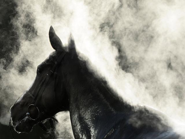 sweaty horse.jpg