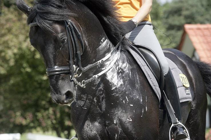 sweaty horse 2.jpg