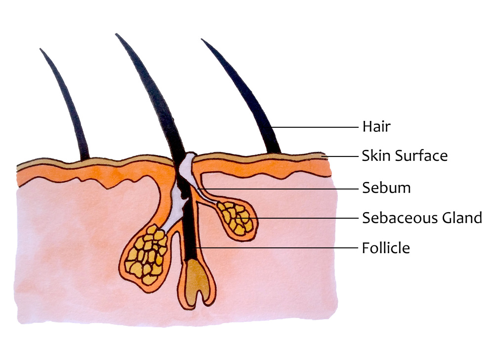 The structure of our scalp