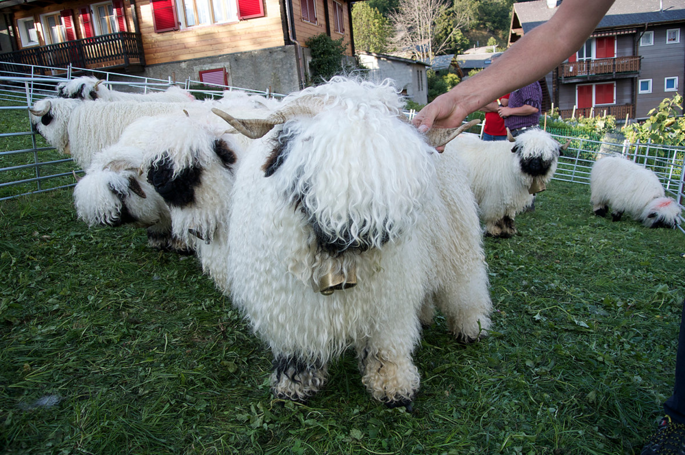 A picture of the real Valais
