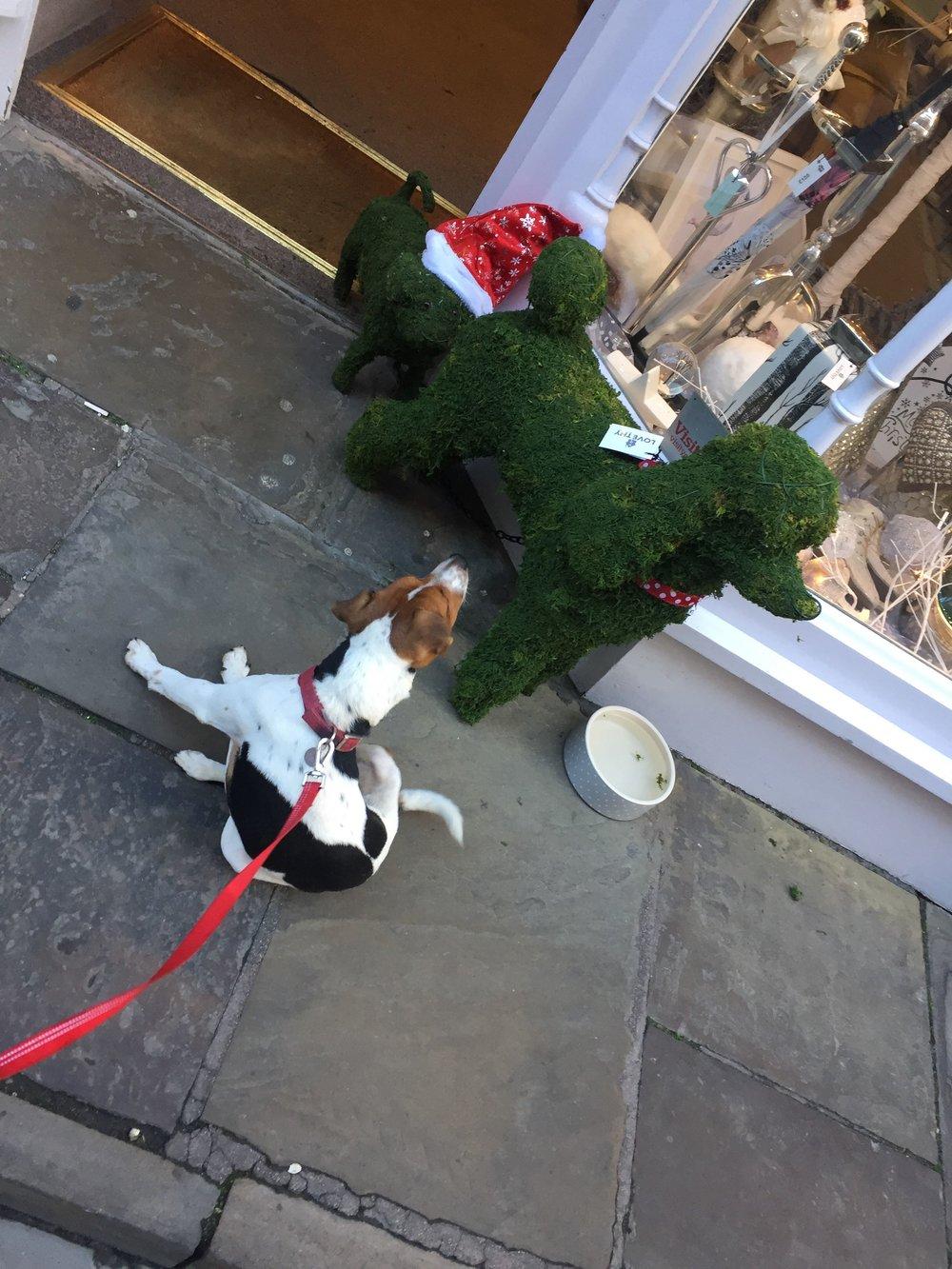 Strange dogs around here Tintin is thinking