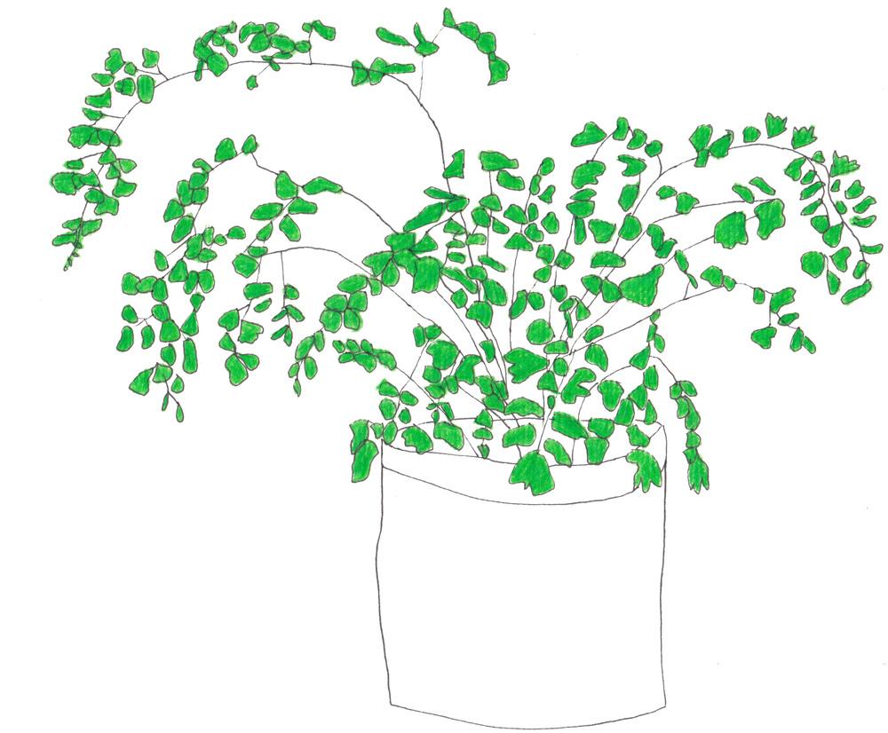 Fin-plante-web.jpg