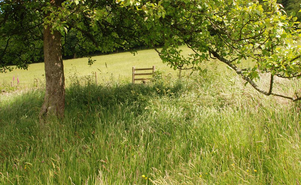Kilgwrrwg Lisa Cox Garden D
