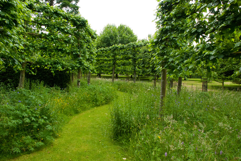 Pleached-hornbeam-walk-at-G.jpg