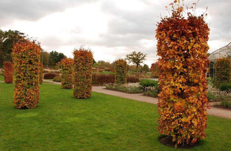 RHS-Garden-Wisley-by-Lisa-C.jpg