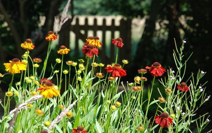 Garden-gate-Lisa-Cox-Garden.jpg