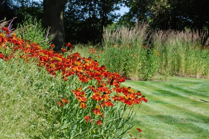 Horsley-garden-redesign-Lis.jpg