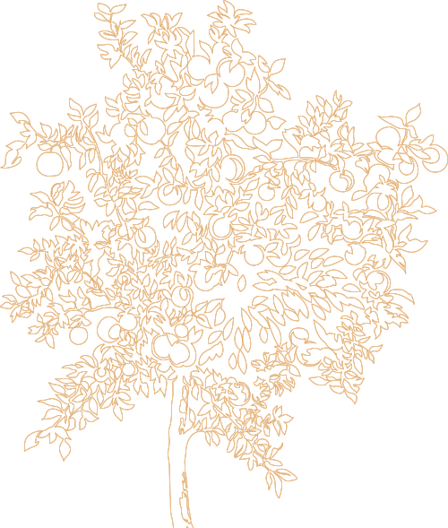 appletree-outline crop.png