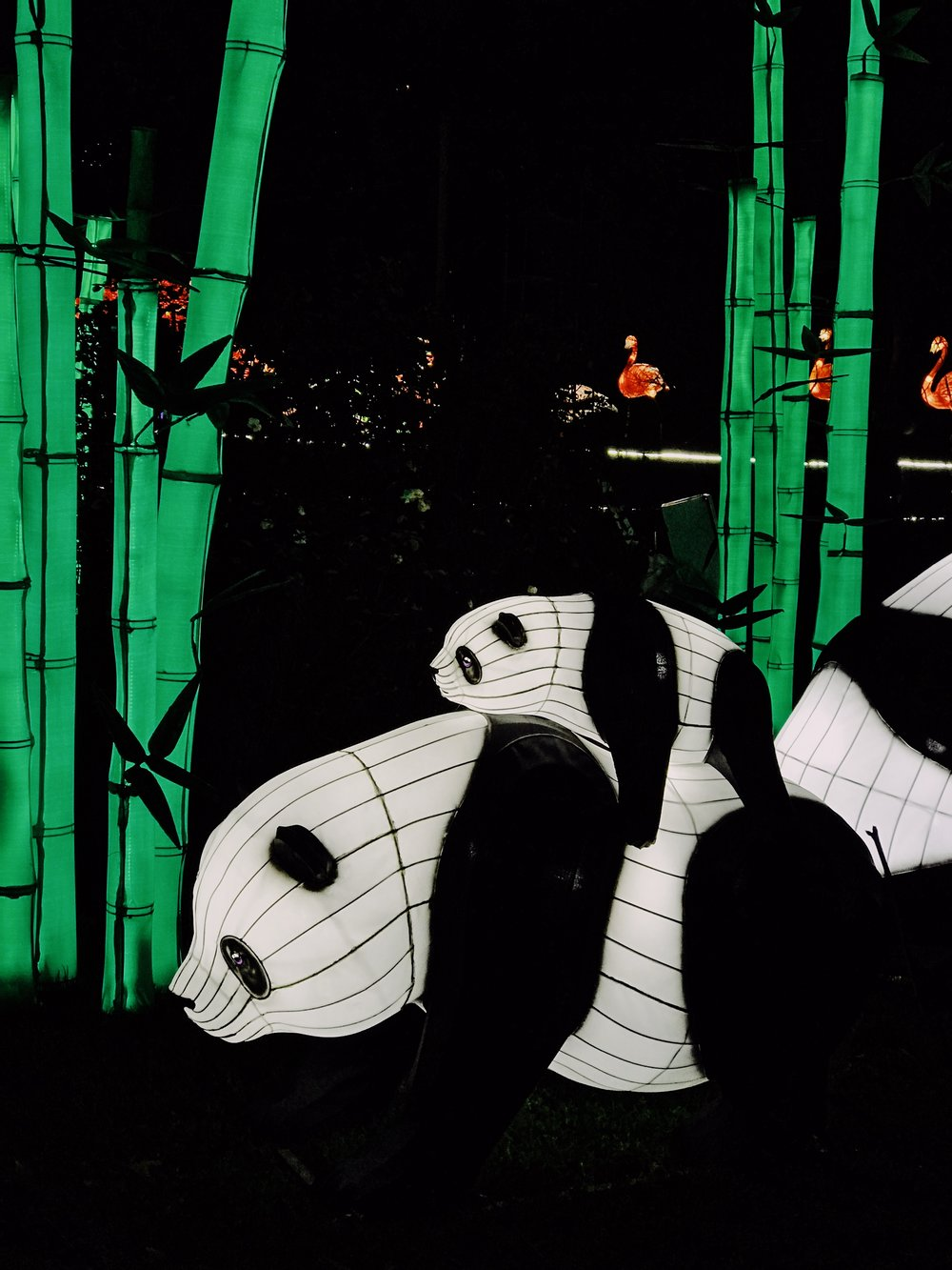 Pandas Chinese lantern display at Edinburgh Zoo