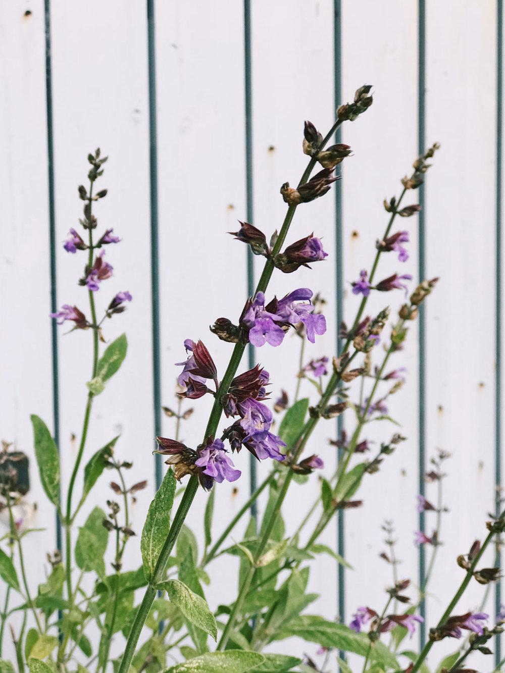 Wild flowers in a secret garden