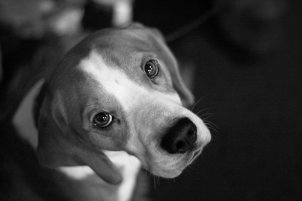 27.12.10 Dog Show-005a.jpg