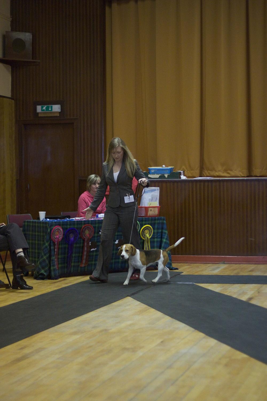 09.10.10 Beagle Show-004.jpg