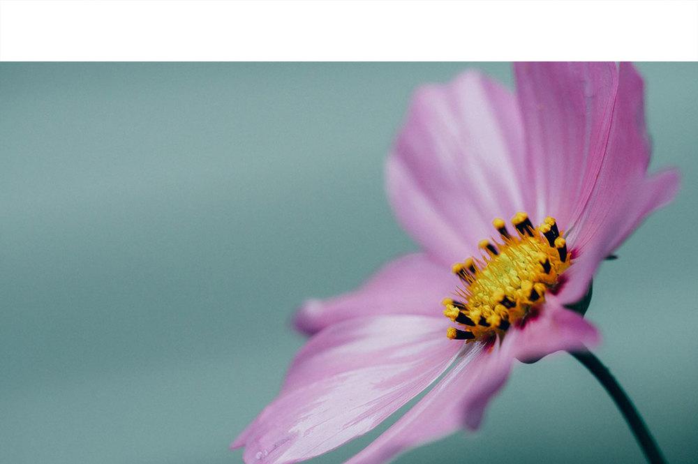 Nature-8.jpg