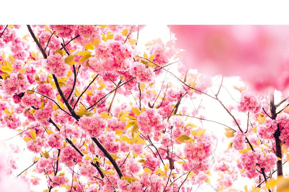 Nature-22.jpg