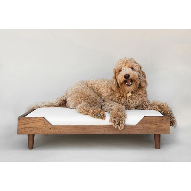 Handsome as ever, #thepupcoltrane modeling our Winston bed in Walnut & White Canvas.