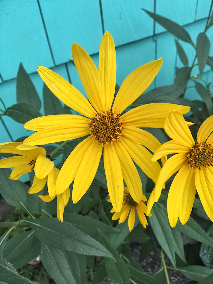 Bright, sunny flowers