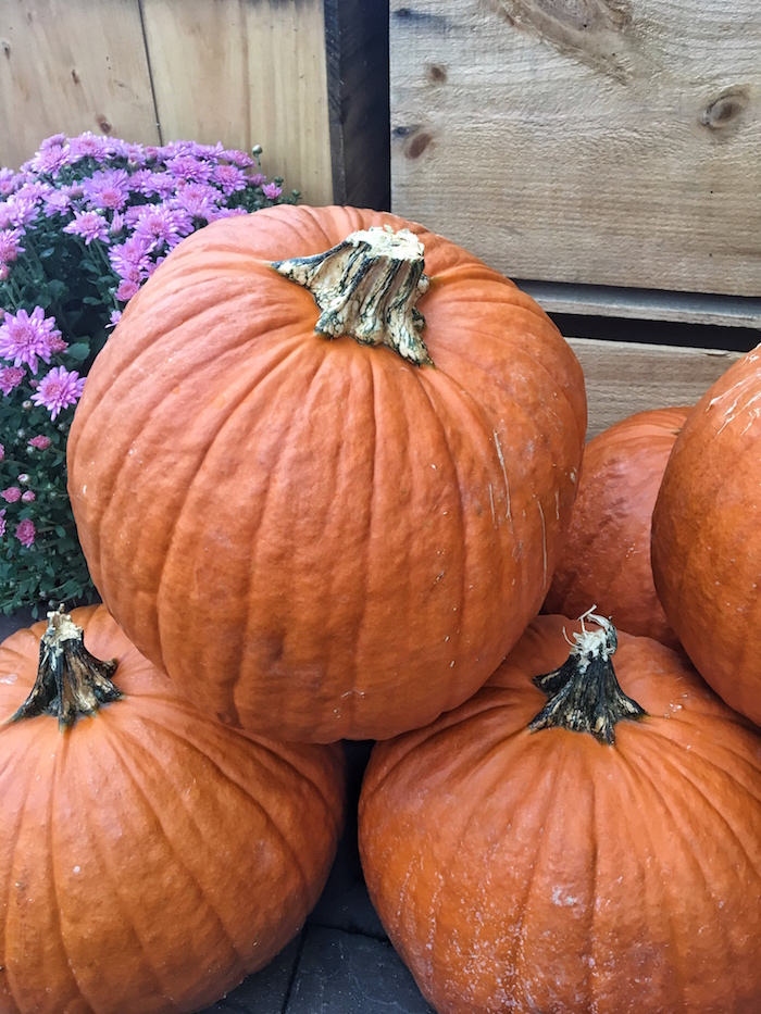 The large selection of pumpkins available