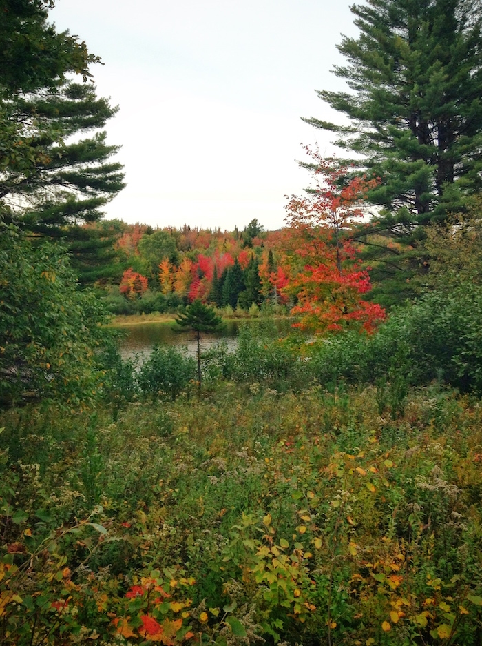 The slow transition to fall