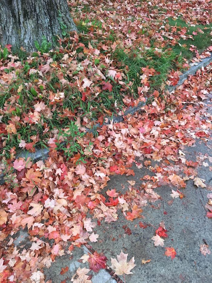 Crisp, colorful fall walks