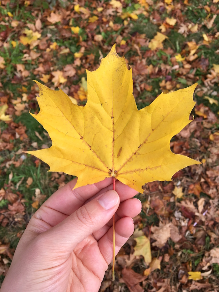 Every last bit of fall