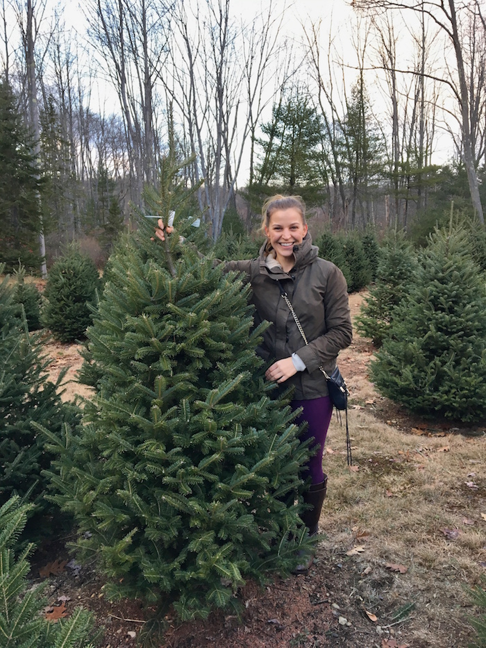 Our beautiful Christmas tree from  The Old Farm Christmas Place of Maine
