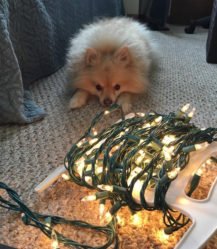 My holiday helper